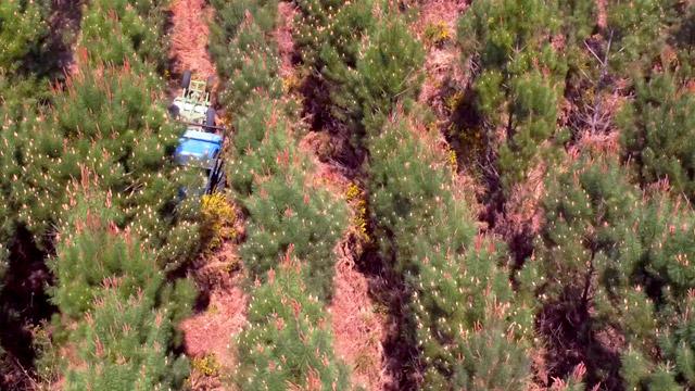 cloisonnement entretien forestier